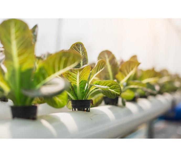 Rasadurile de legume – particularitati pentru cultura in solarii