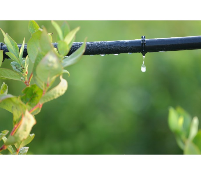 Irigarea prin picurare, sistemul ideal pentru culturile de legume