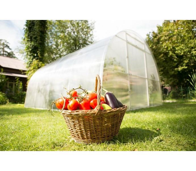 Cum sa sporiti eficienta legumelor in sere si solarii