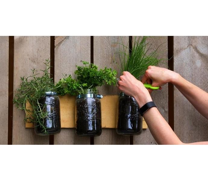 Cum ingrijesti legumele de apartament?